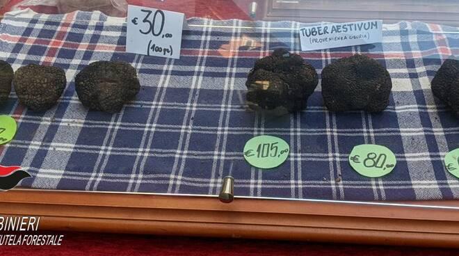 tartufi sequestrati alba carabinieri forestali