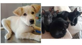 marley e i sei gattini neri