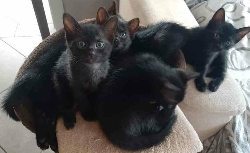 pelosetti sei gattini fratellini neri