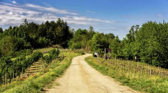 XIII Edizione del Festival del Paesaggio Agrario 2021 vinchio