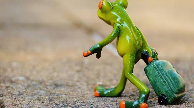 frog pixabay