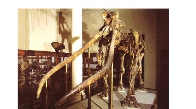mastodonte bologna