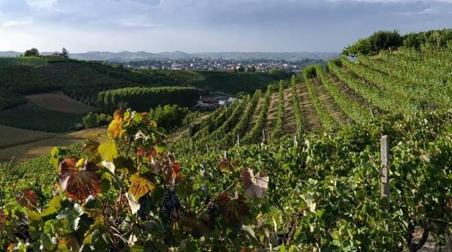 vigne san damiano